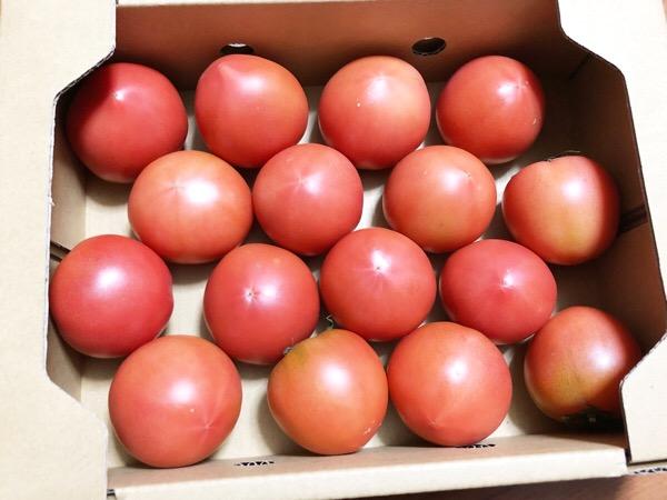 実家からトマトがとどきました|トマトは1個だいたい40kcalです